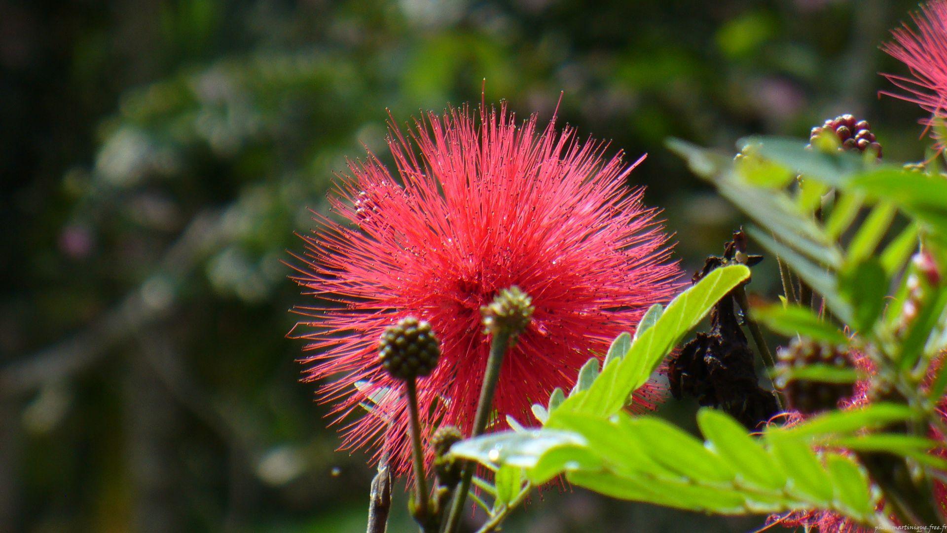 Photo Nature Martinique